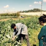 Producció agrícola al Papiol: qualitat versus quantitat